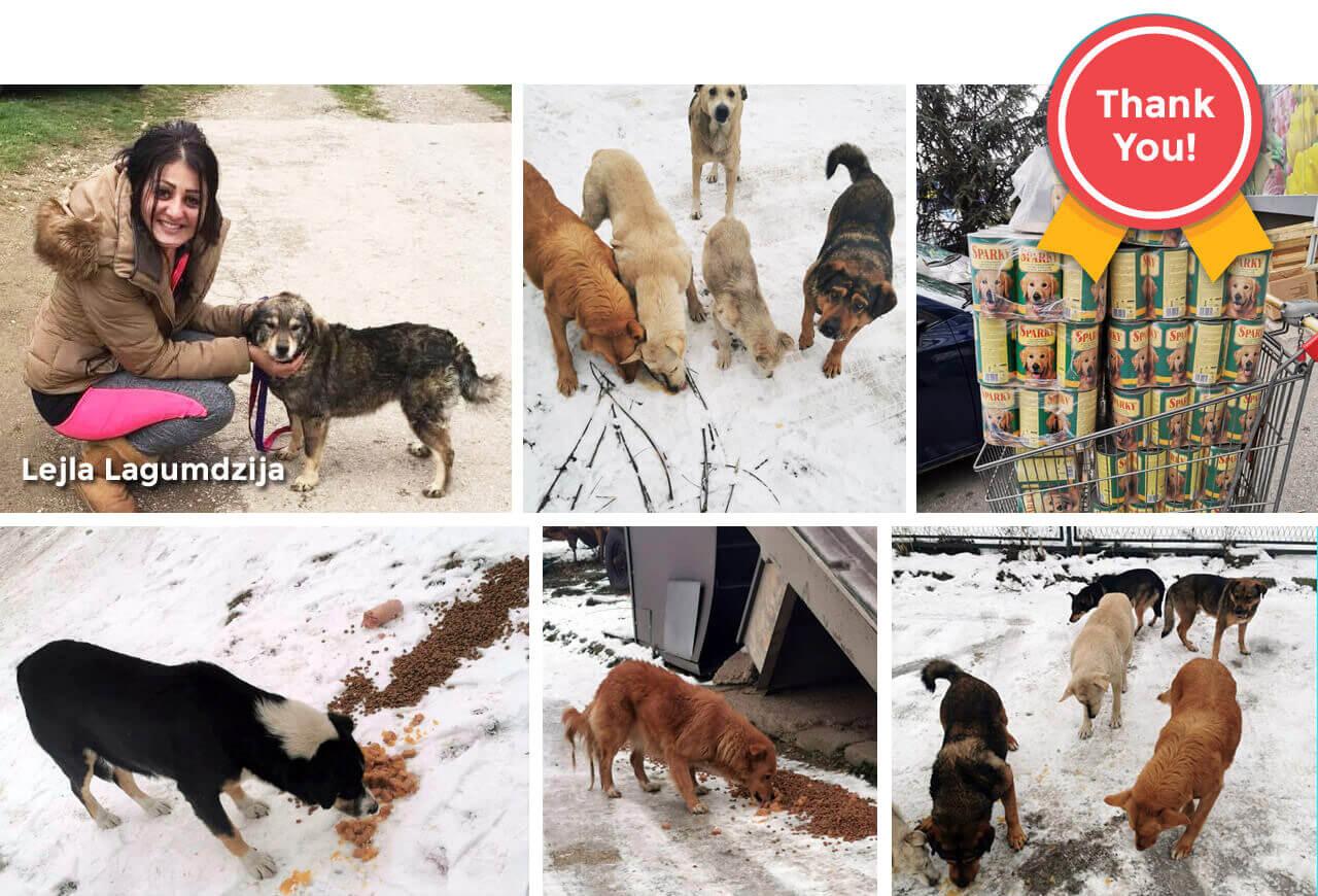 animal rescue in sarajevo