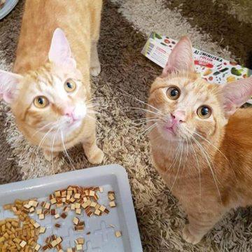 Street cats feeding