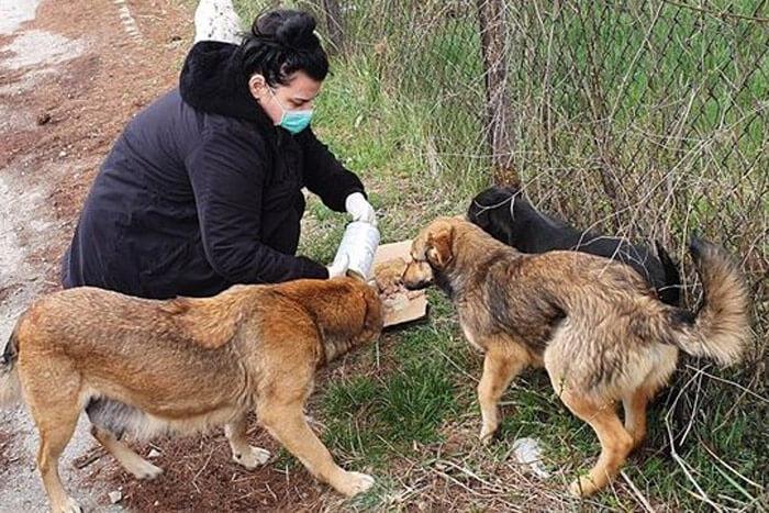 Bosnia Animal Rescuers