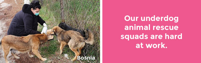 Our underdog animal rescue squads are hard at work. –Bosnia