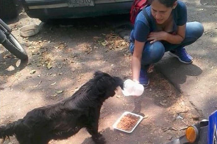 Venezuela animal rescuers