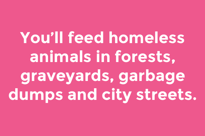 You'll feed homeless animals in forests, graveyards, garbage dumps and city streets.