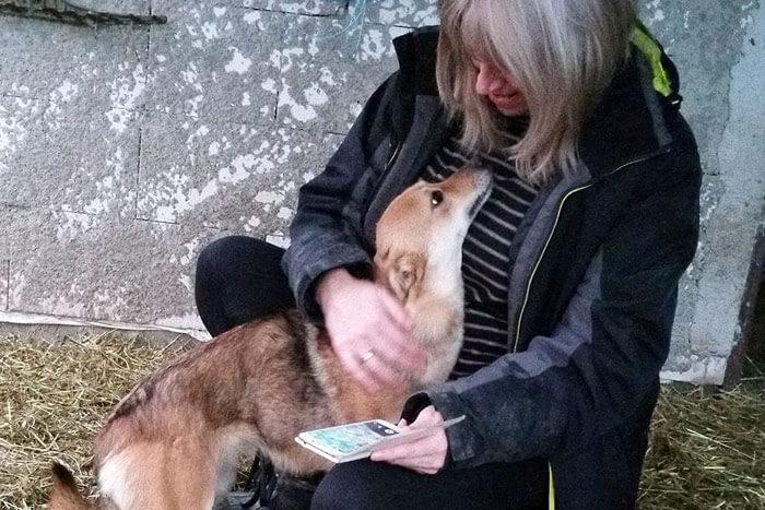 Romania animal rescuer