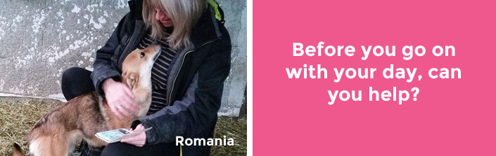 Before you go on with your day, can you help? – Romania