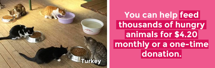 You can help feed thousands of hungry animals for $4.20 monthly or a one-time donation – Turkey