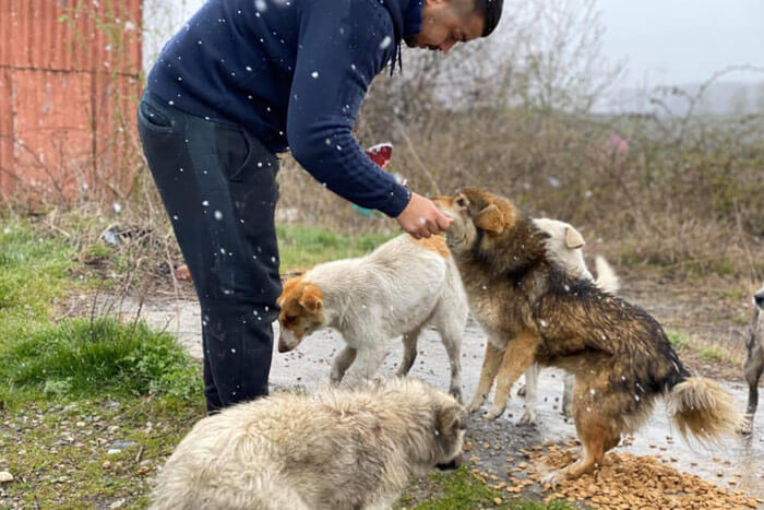 Romania feeding rescue dogs