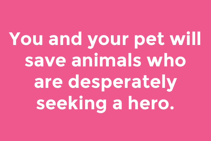 You and your pet will save animals who are desperately seeking a hero