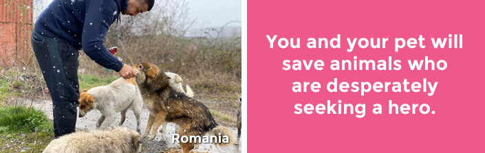 You and your pet will save animals who are desperately seeking a hero. Romania