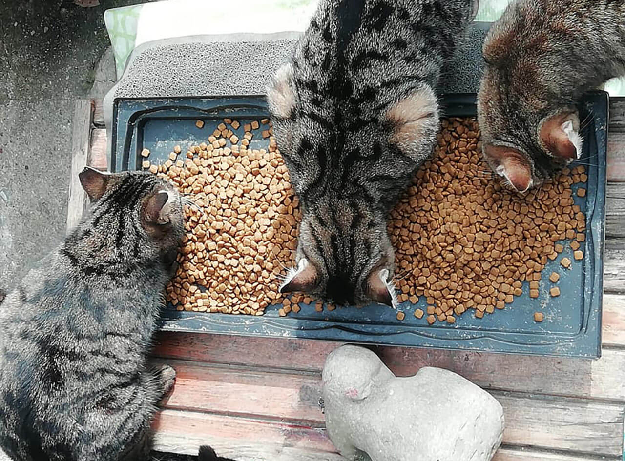 Feeding street cats in turkey