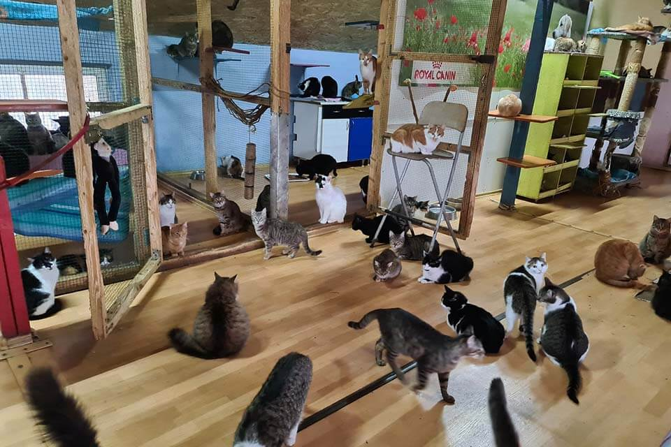 Cats room in Romanian animal shelter.