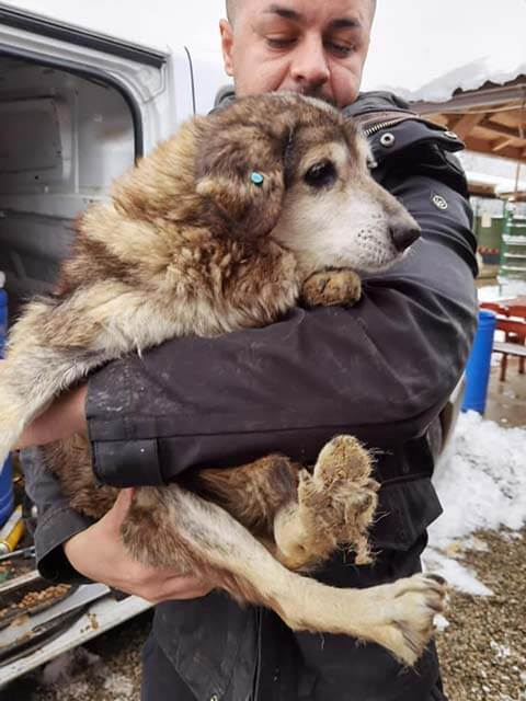 Rescuer holding old rescue dogs in Romania.