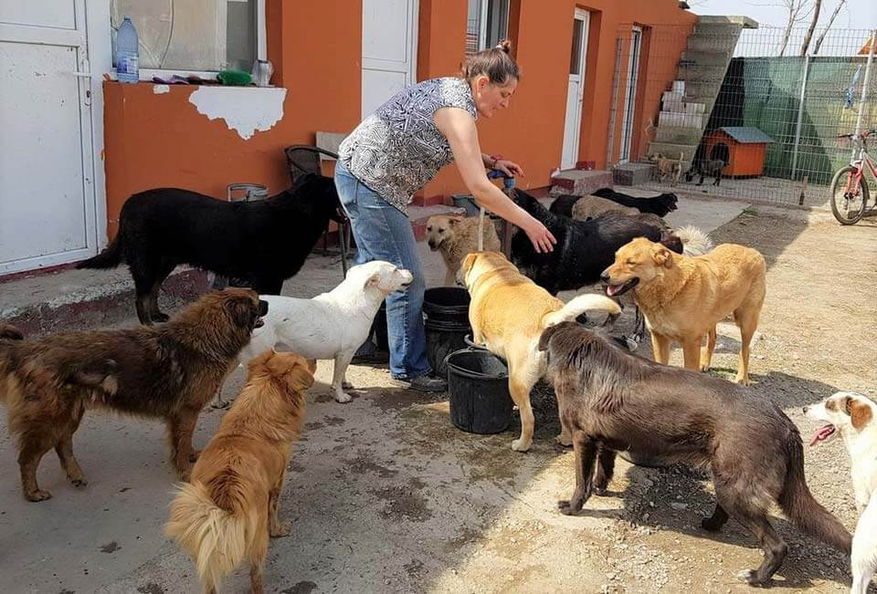 Animal rescuer in Romania taking care of her rescue dogs.