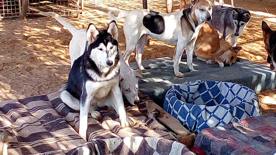 Rescued dogs sitting on the blankets comfortably.